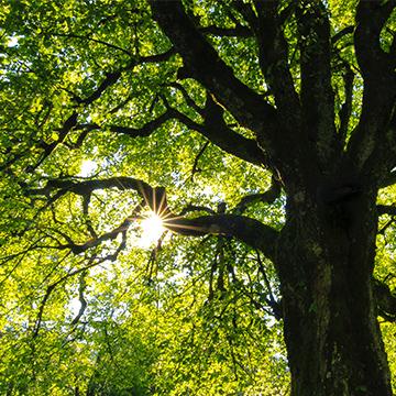 Compteur d'arbres de la commune de Castelginest